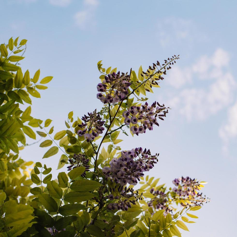 bloeiende groene boom foto