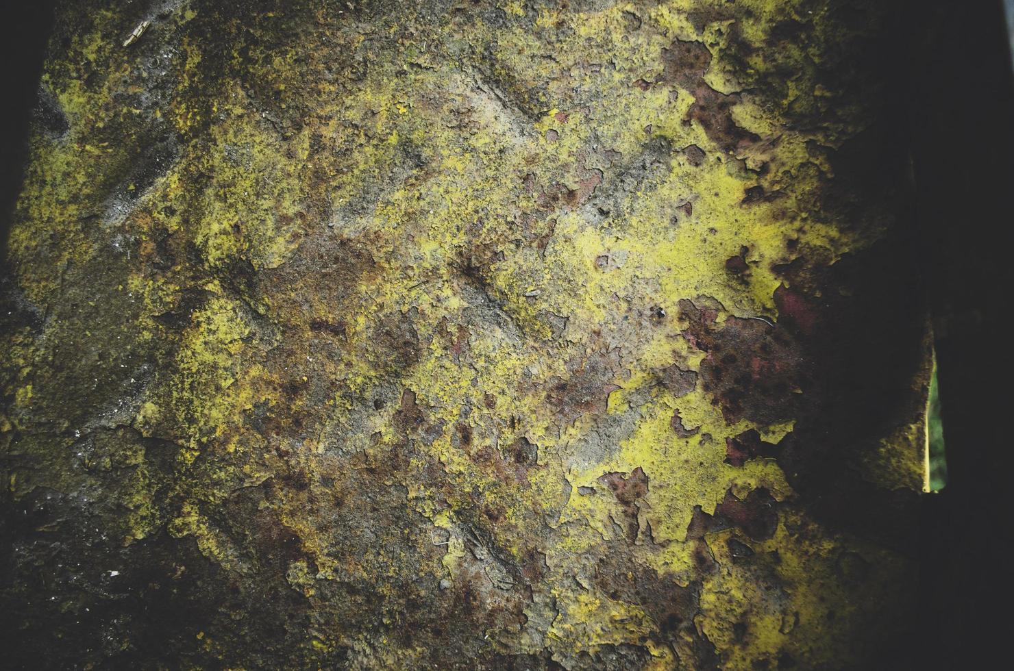 groen en bruin mos foto
