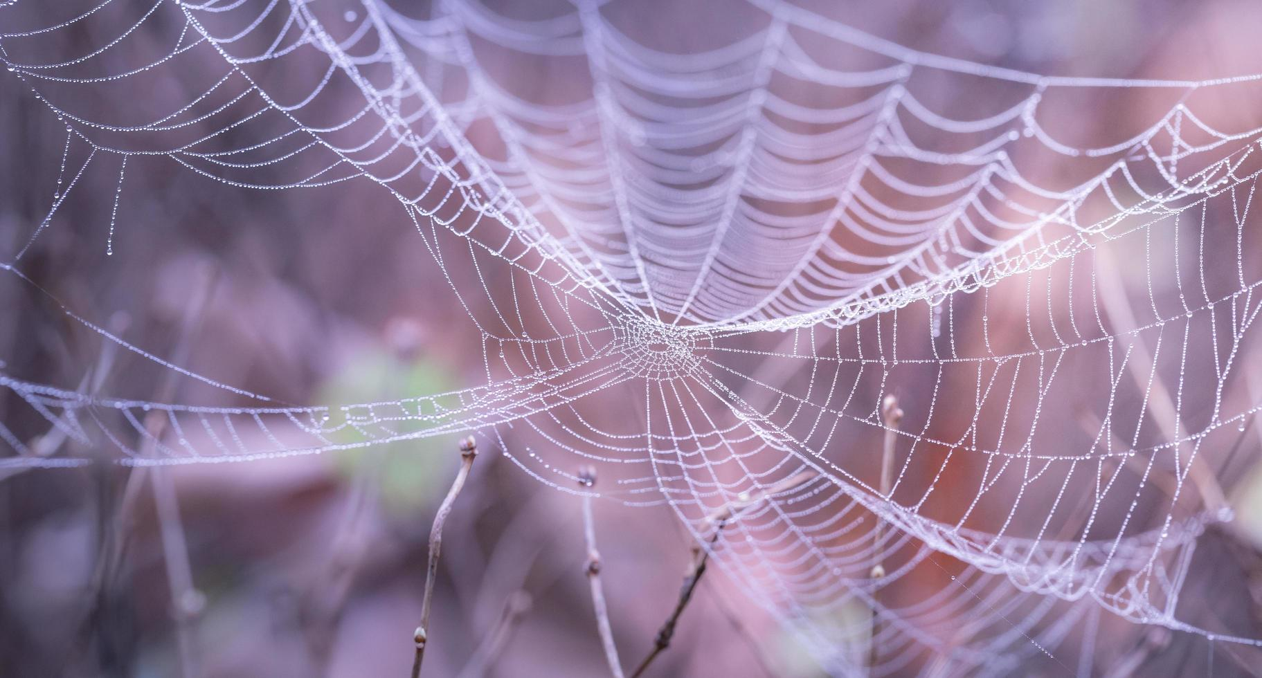close up van spinnenweb foto