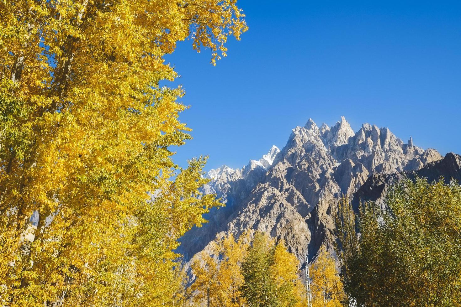 gele bladeren bomen in de herfst foto