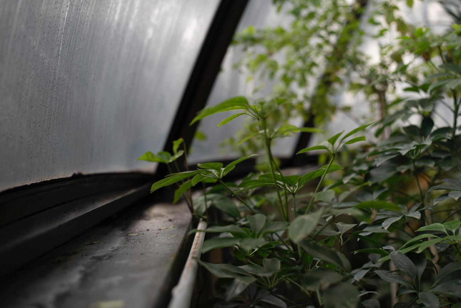 groene plant in de buurt van kas raam foto