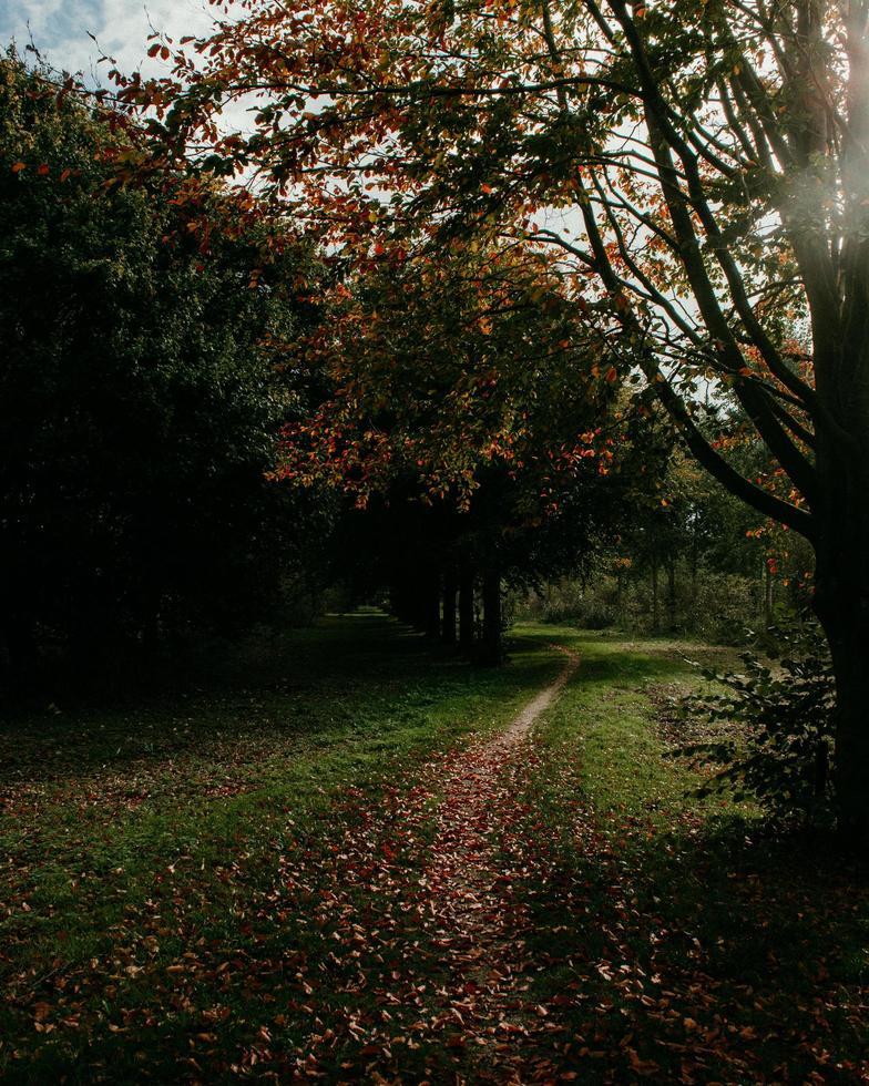 gevallen bladeren op pad naast boom foto