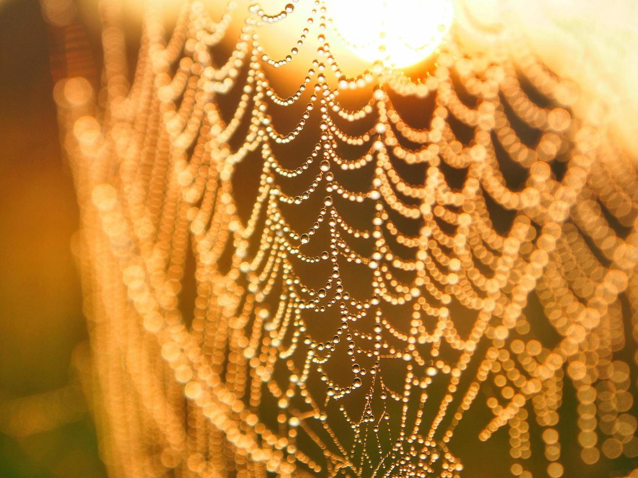 macro spinnenweb foto