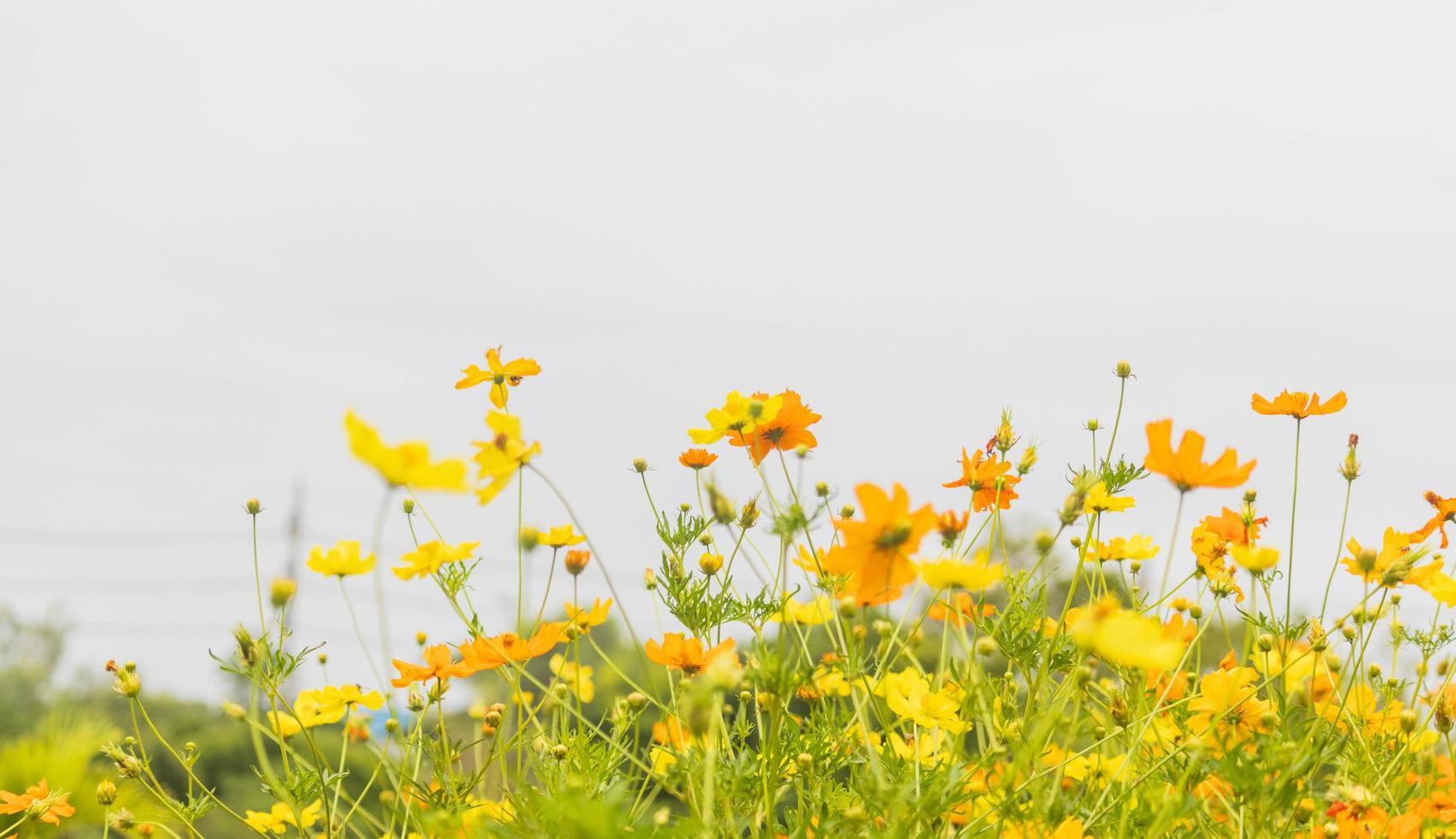 bloemen bloeien in de tuin foto