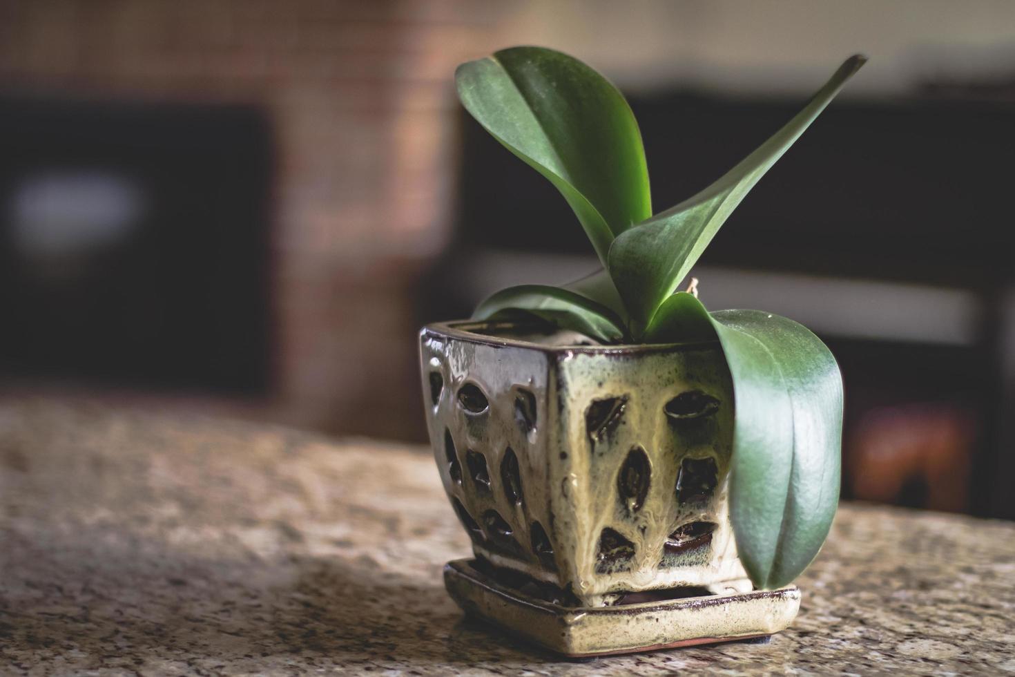 groene potplant foto