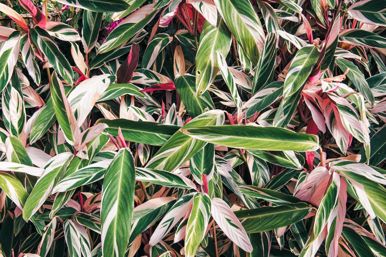 tropische natuur blad plant achtergrond foto