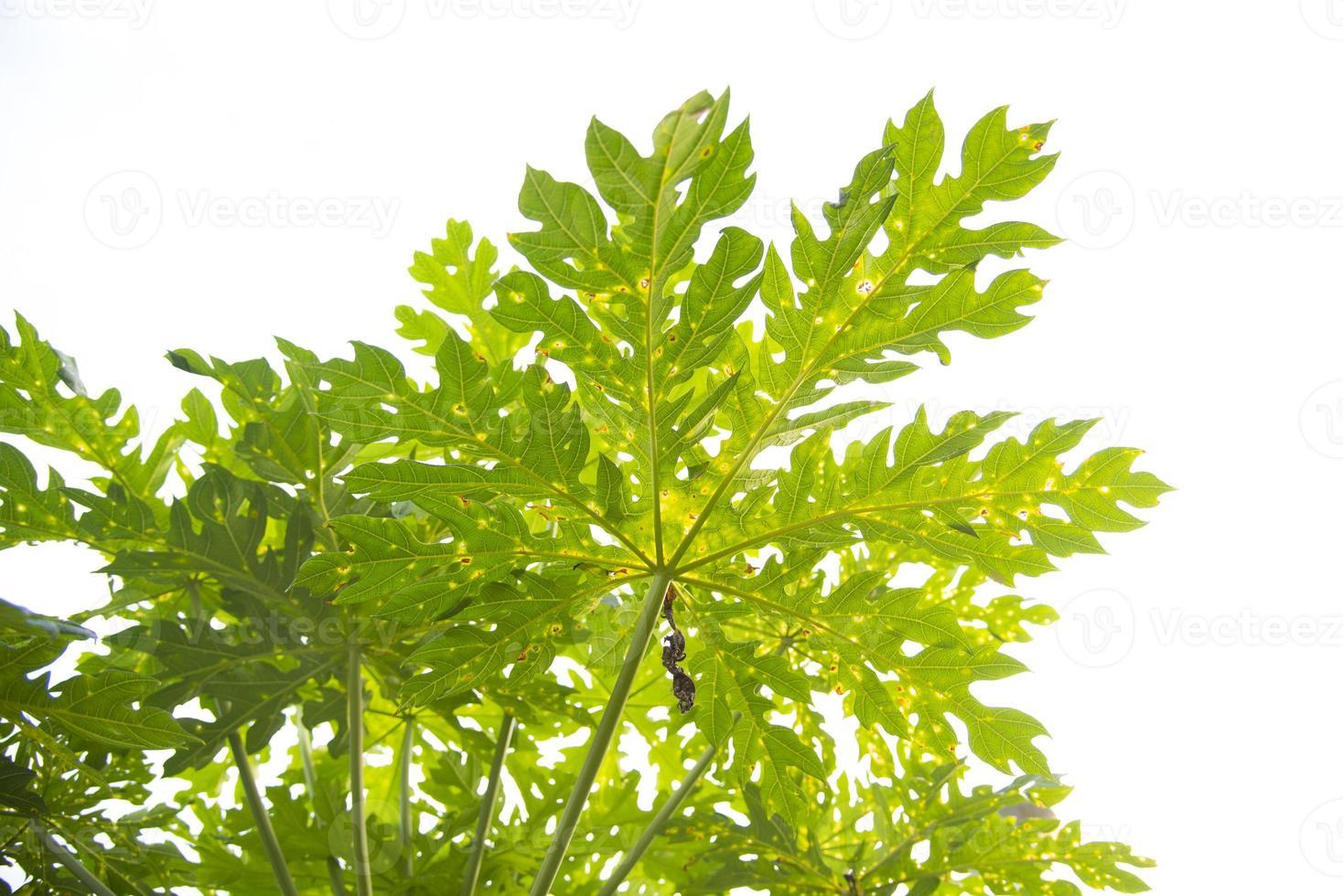 zaaien van planten foto
