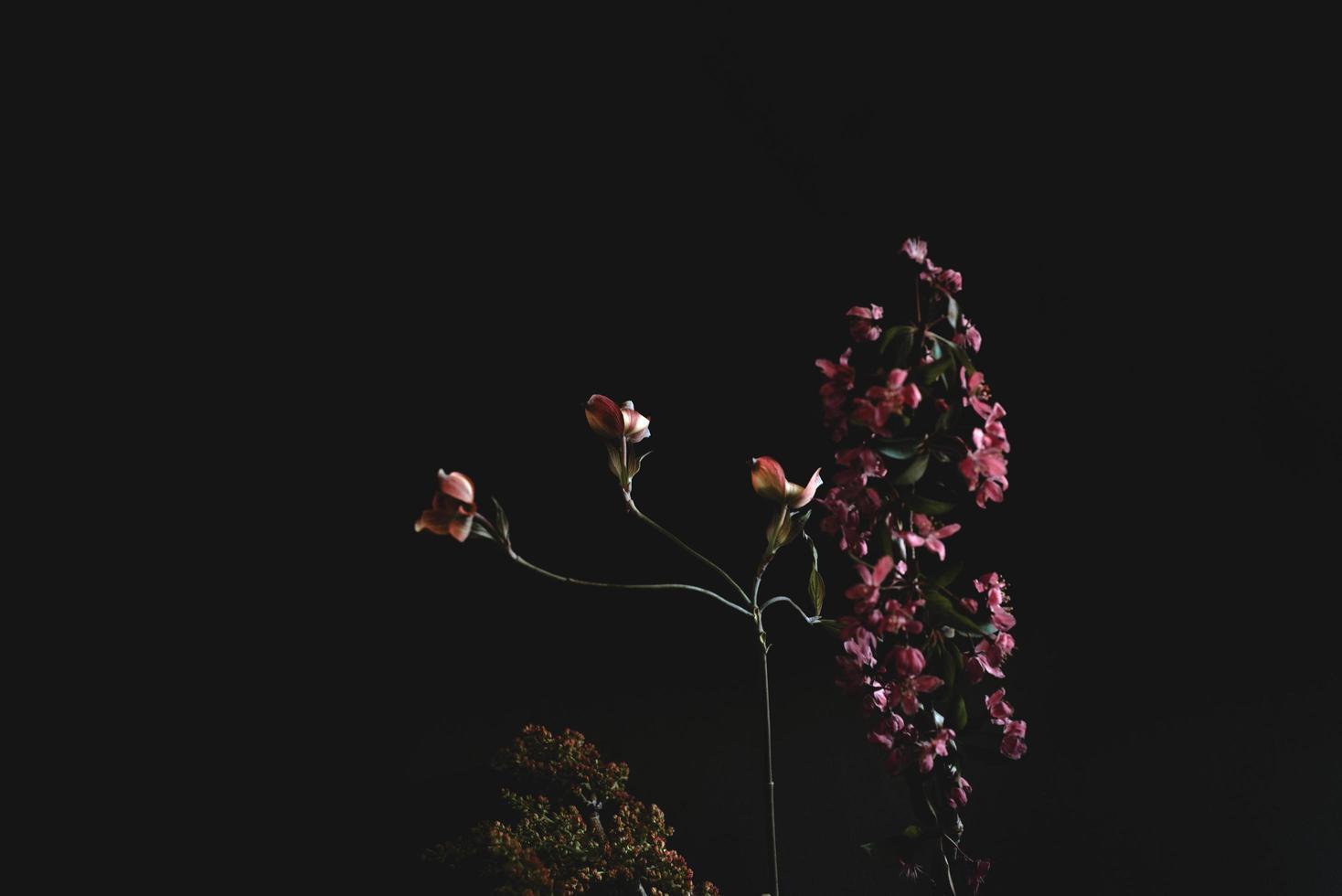 roze en witte bloemen met groene bladeren foto