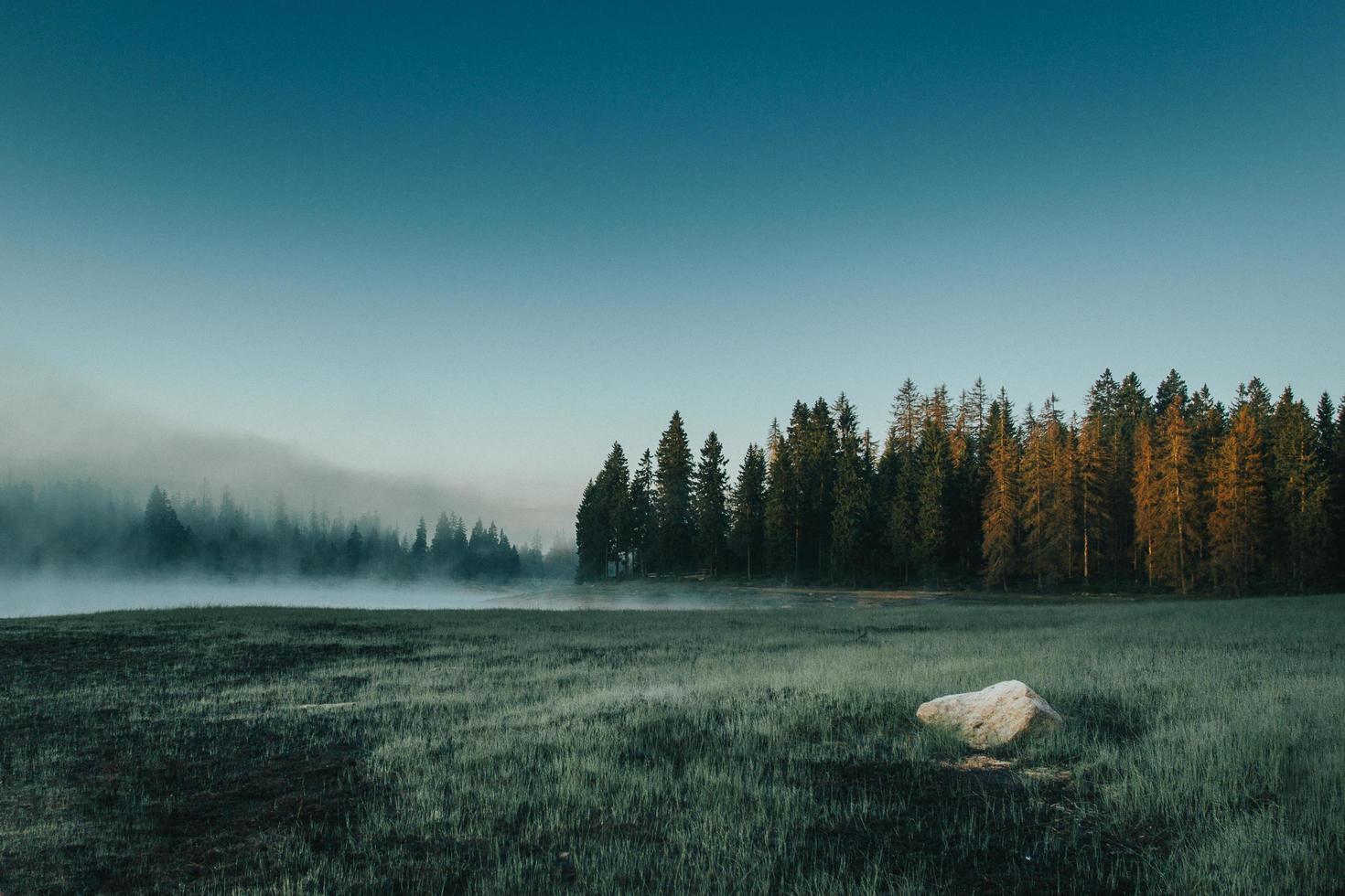 mistig veld met gras en bomen foto