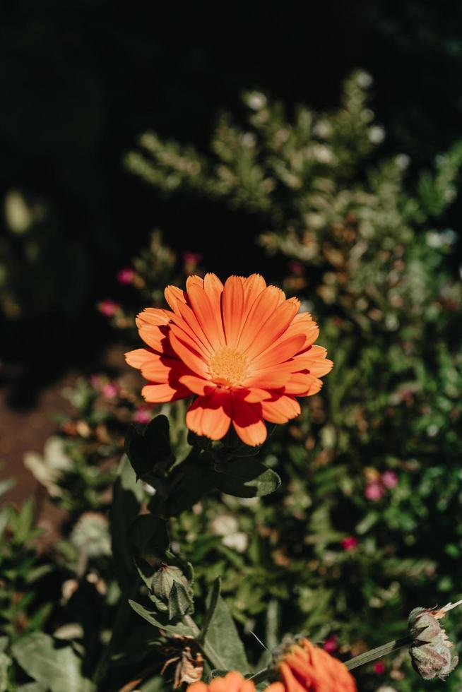 super fel oranje bloem foto