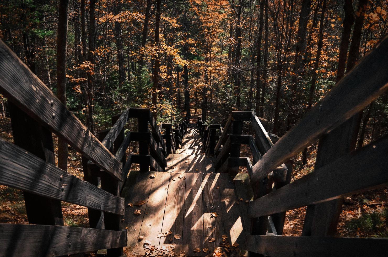 houten trap in het bos foto