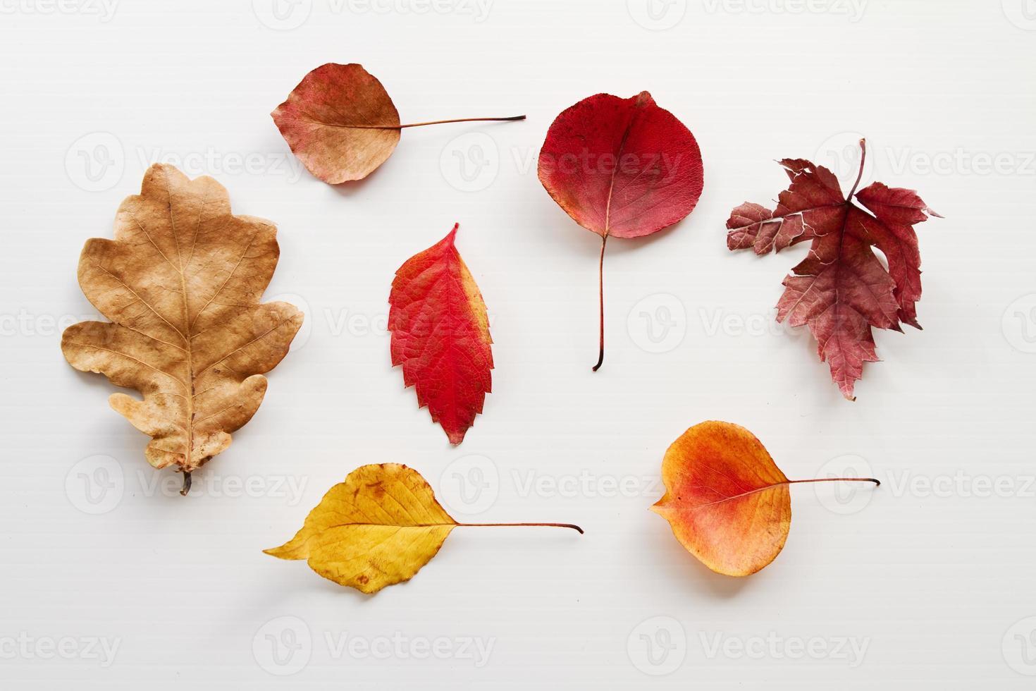 bovenaanzicht van verschillende herfstbladeren op witte achtergrond foto