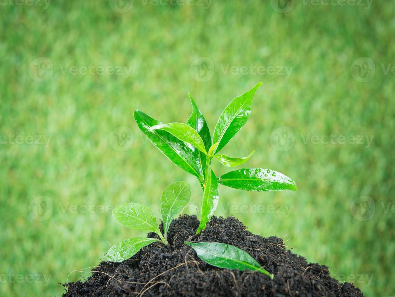 jonge kleine nieuw leven groene plant foto