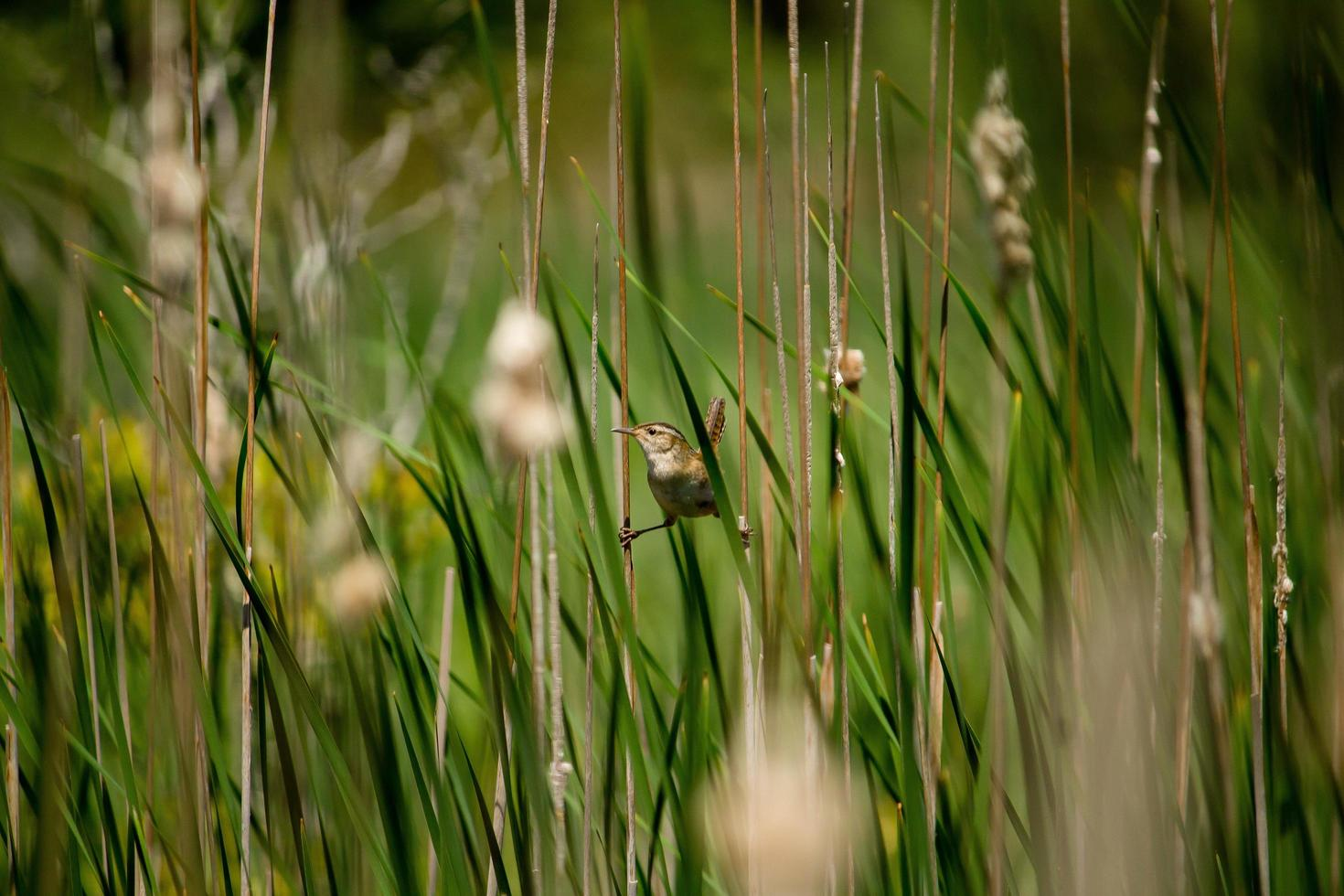 vogel zat op planten foto