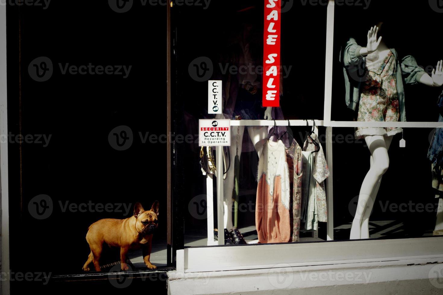 hond bij de winkelingang foto