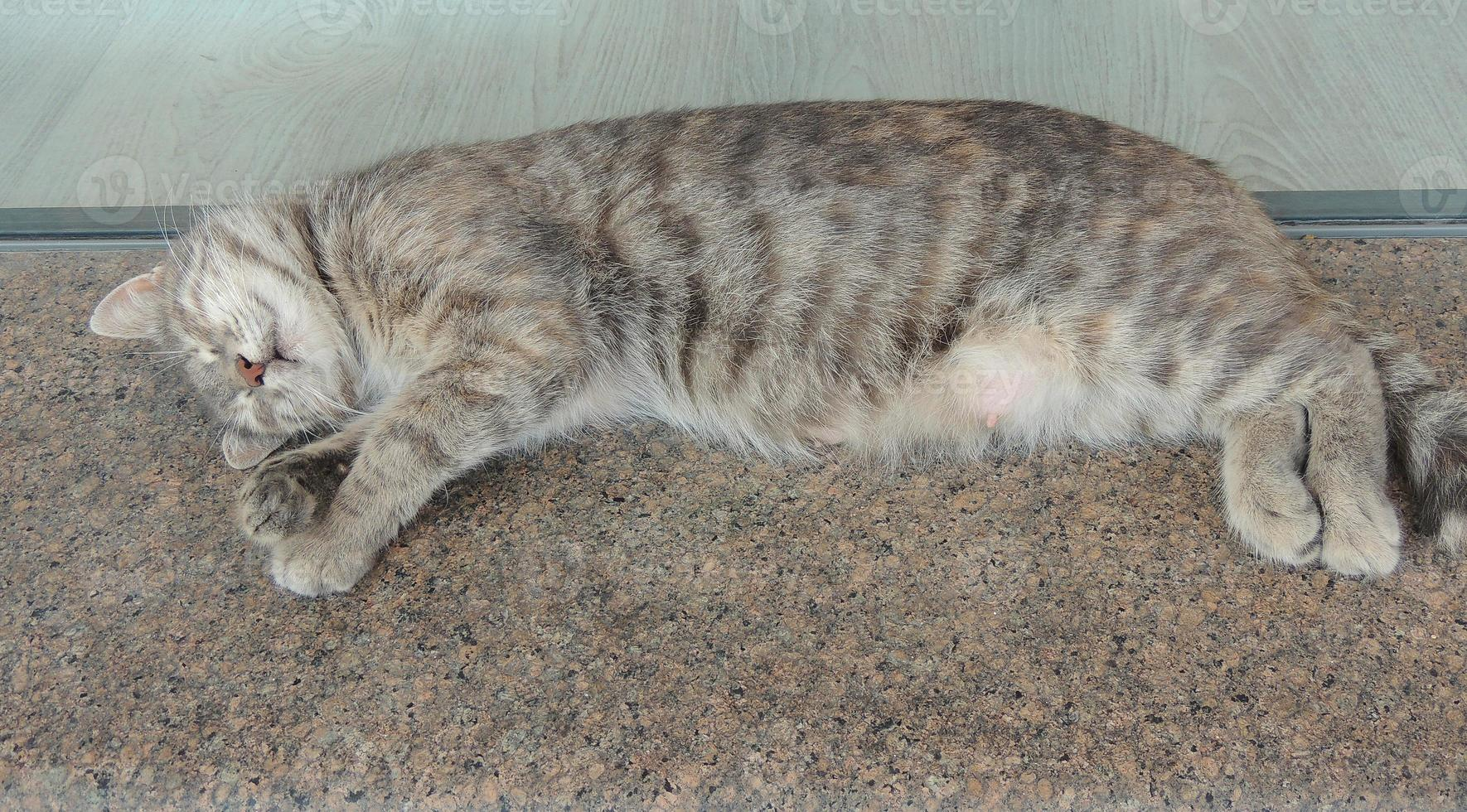slapende kat. foto