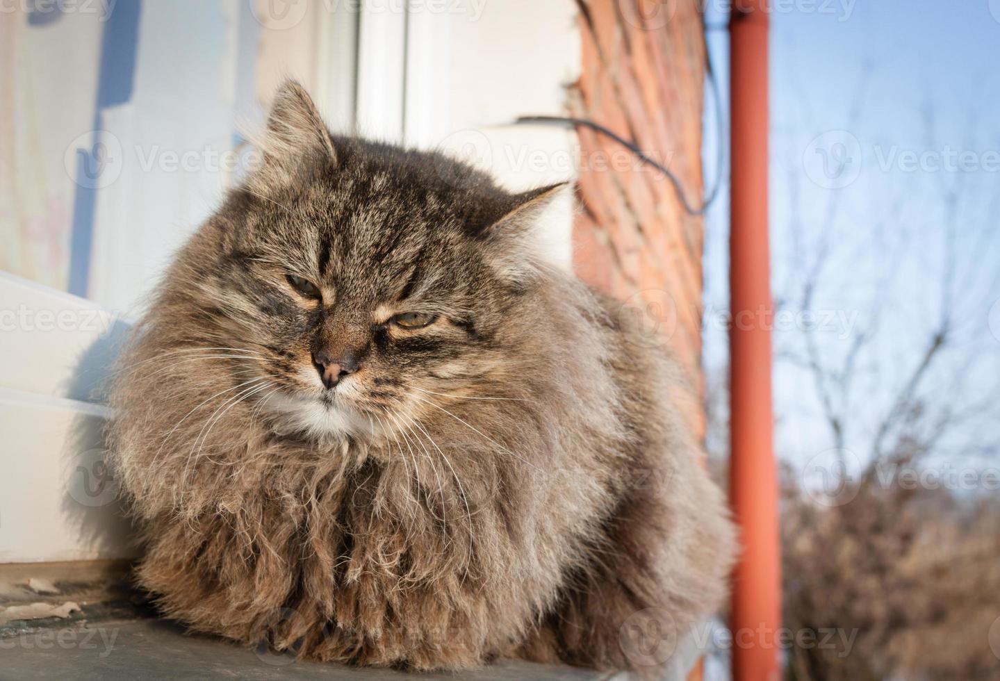 mijn kat foto