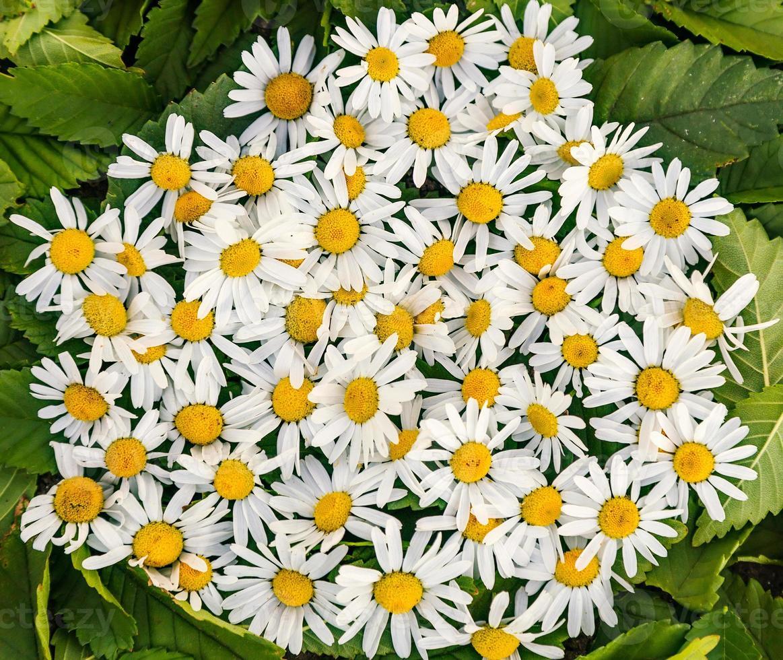 florale achtergrond. foto