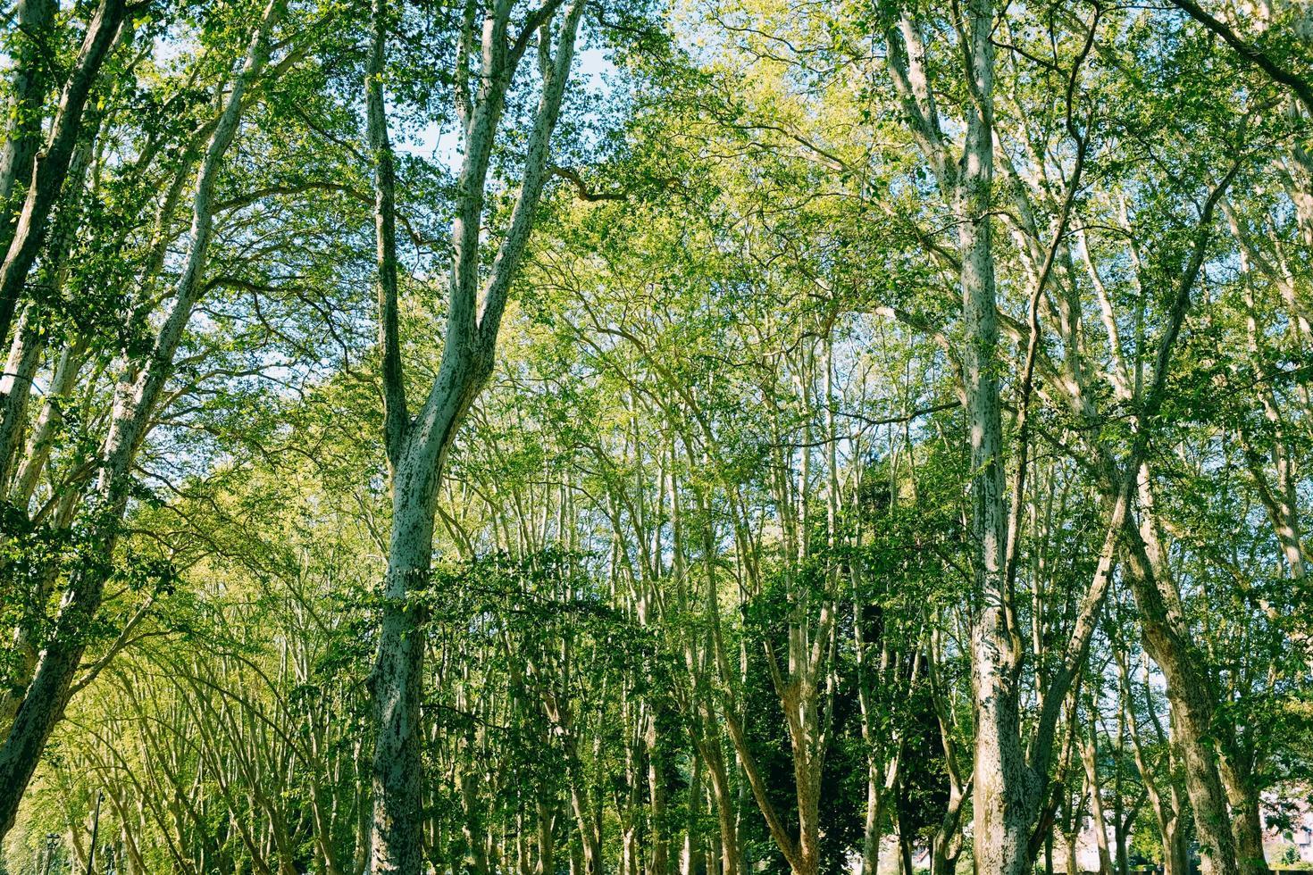 bomen met blauwe lucht foto