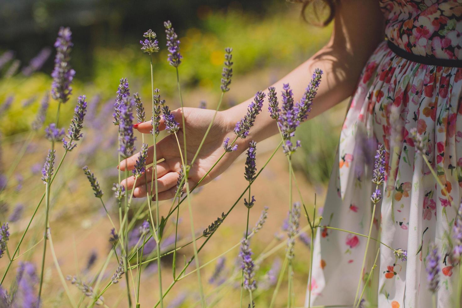 vrouw loopt hand door lavendel foto