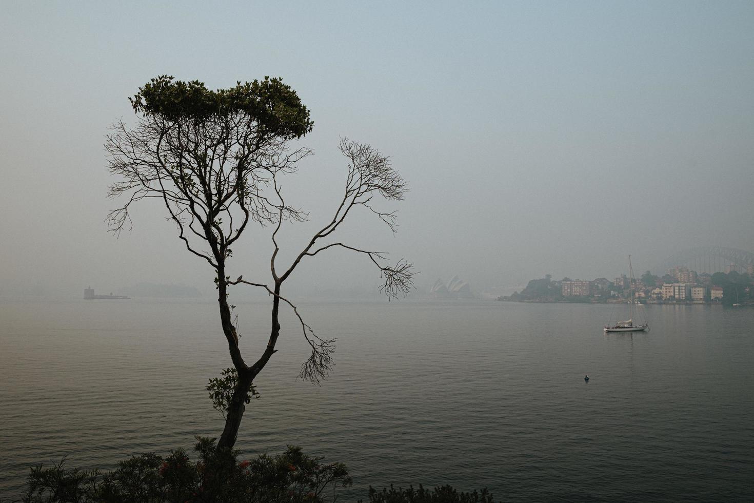 eenzame boom op een mistige dag foto