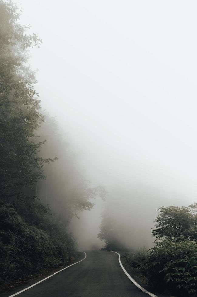 groene bomen bedekt met mist foto