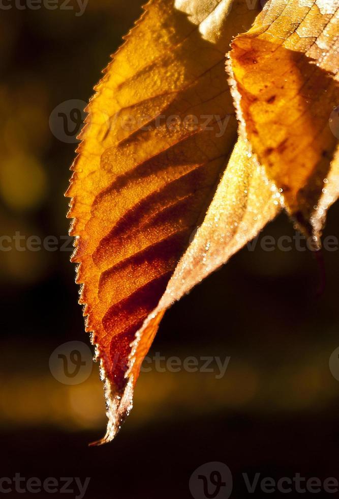 in herfstbladeren foto