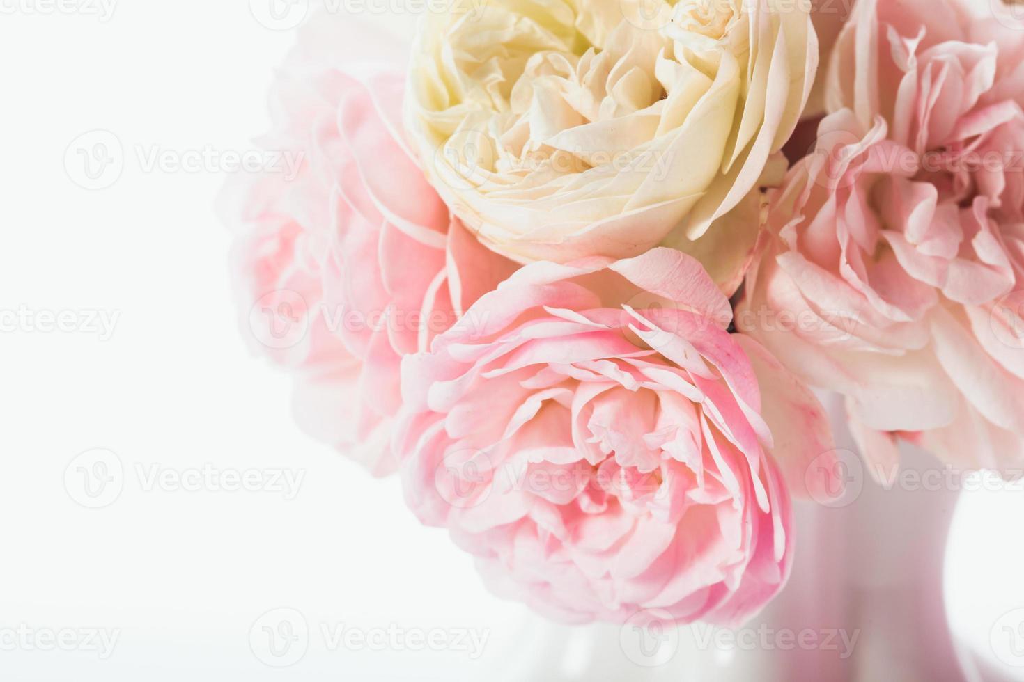 roze rozen bos foto