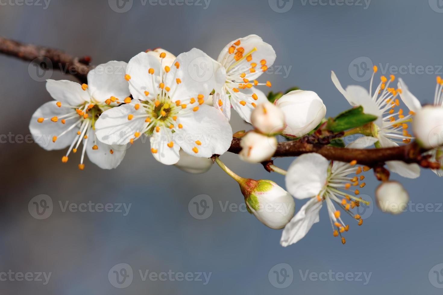 de vruchten bloeien foto