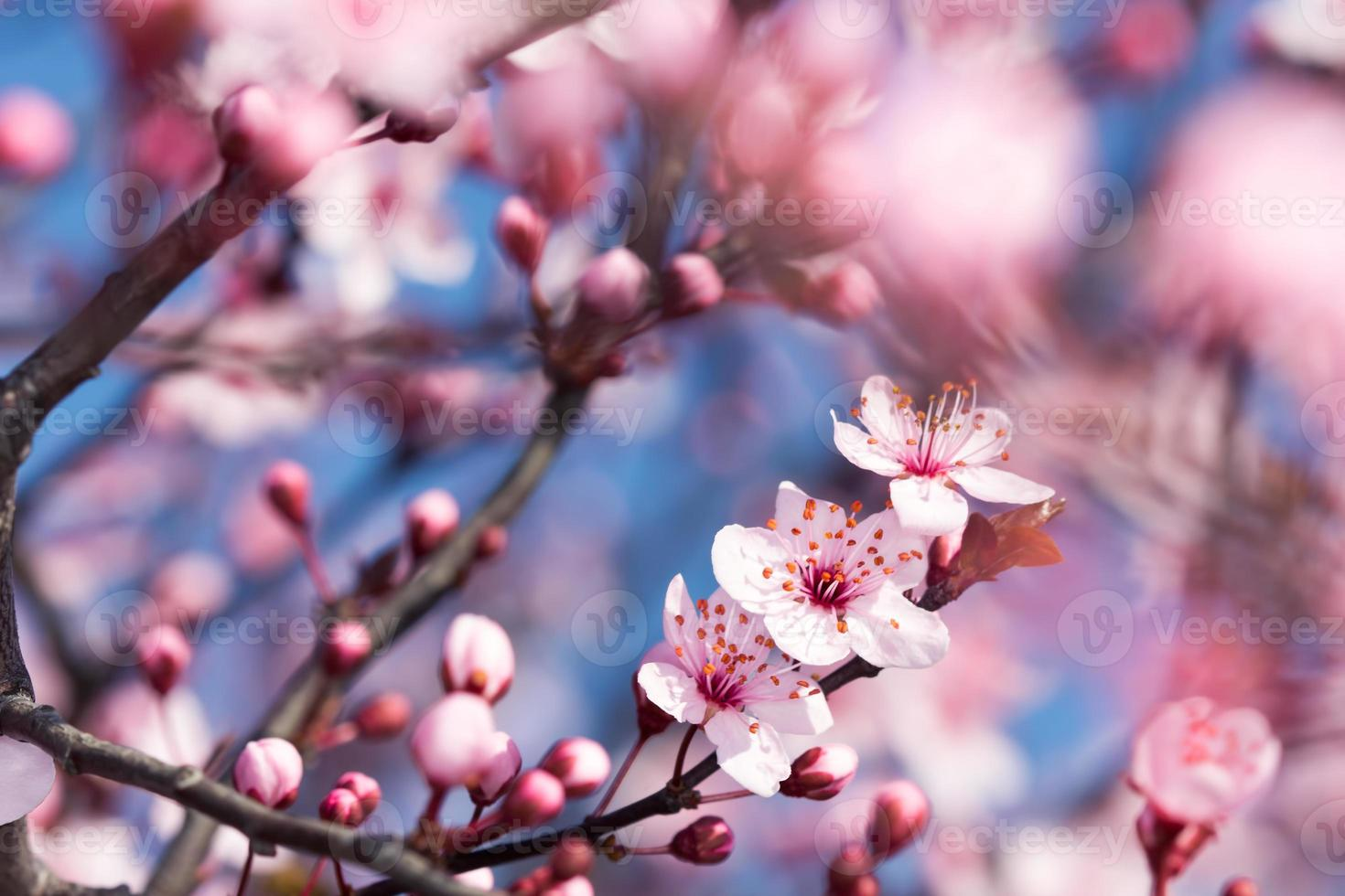 bloeien in het voorjaar foto