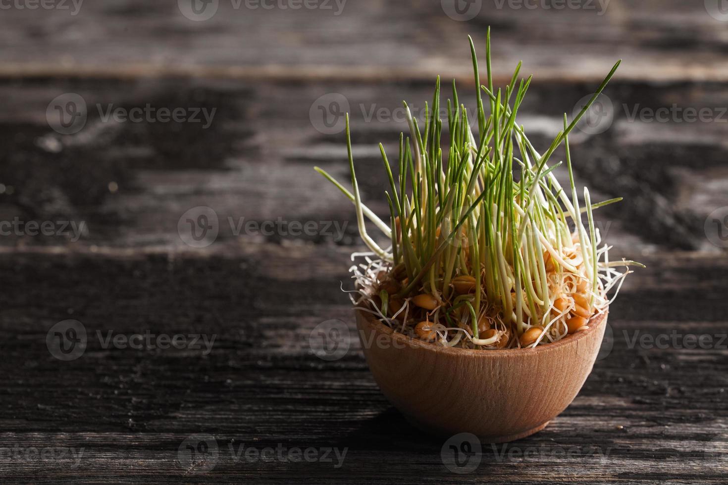 tarwegras spruiten in een houten kom foto
