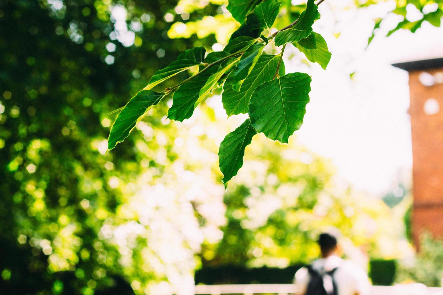selectieve focus foto van groene bladeren