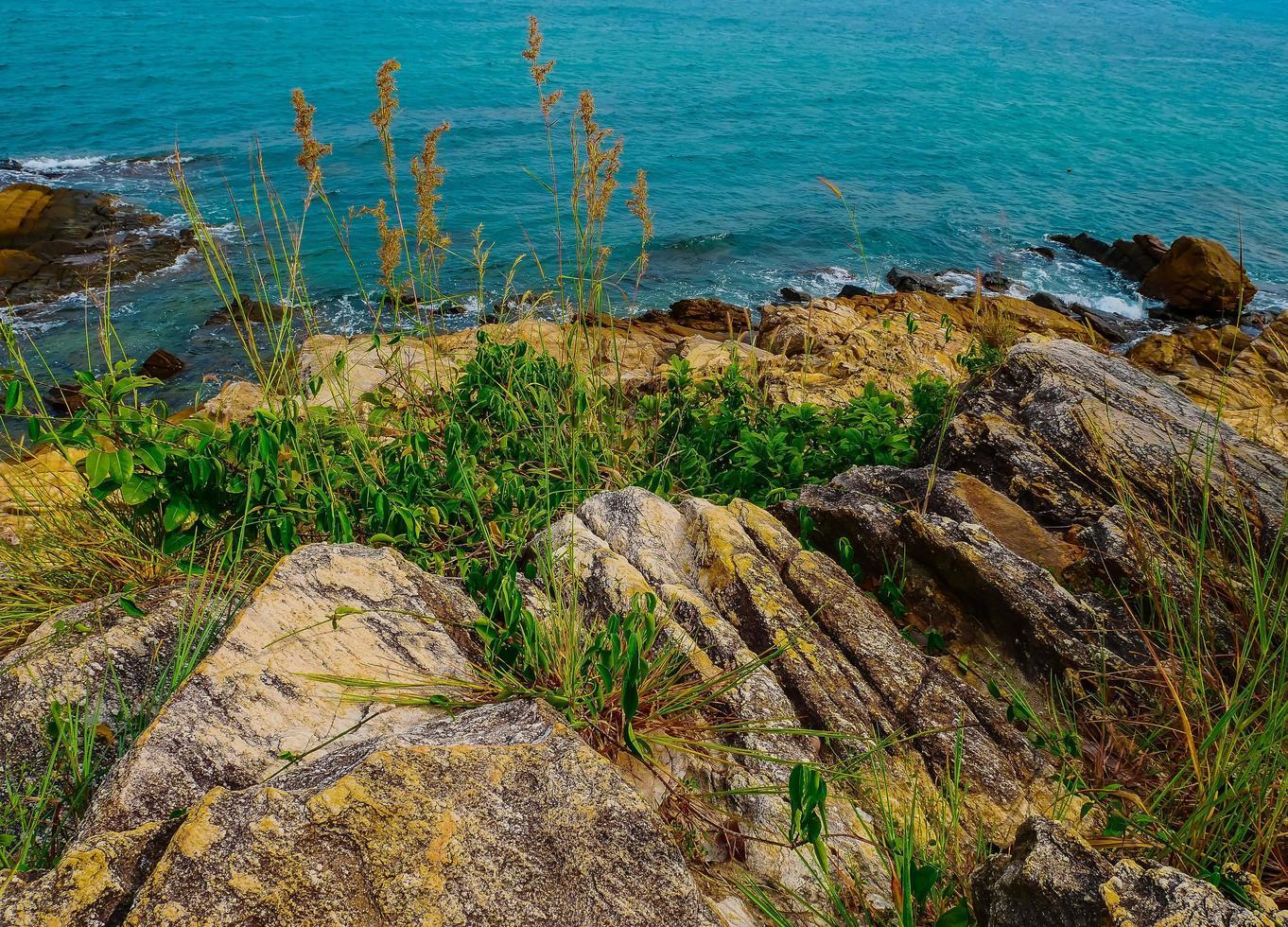 gras op rotsen naast de oceaan foto