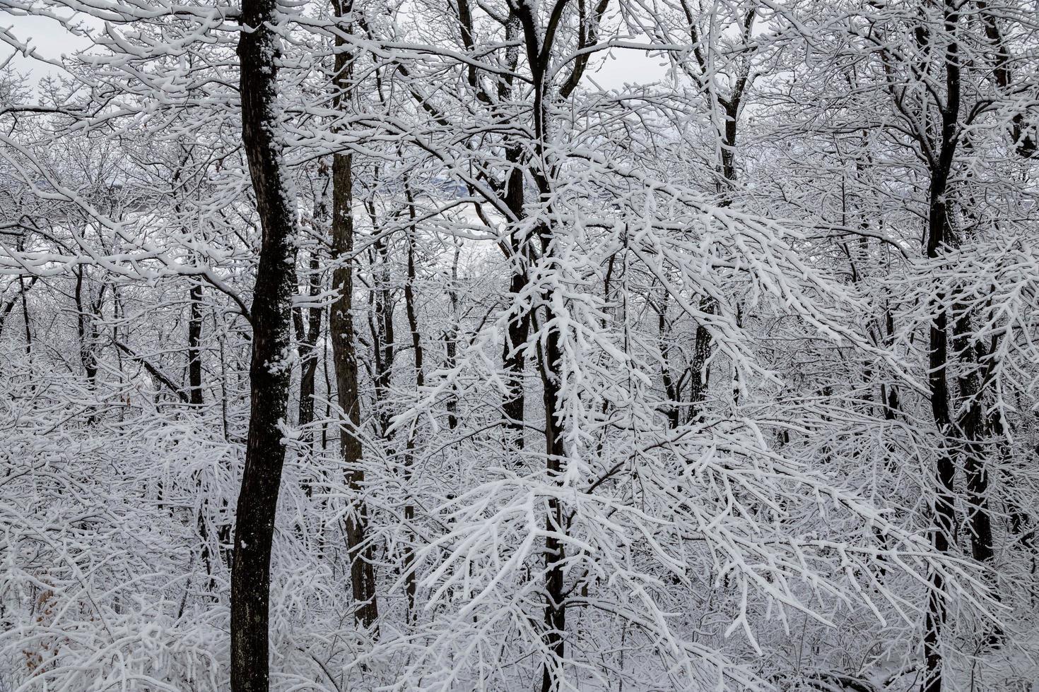 met sneeuw en ijs bedekte bomen foto