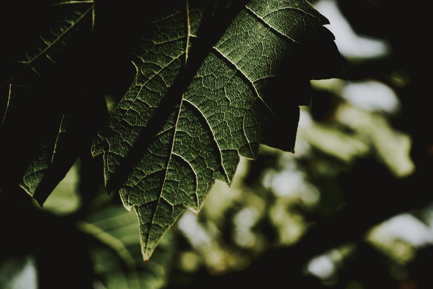 close-up van groen blad foto