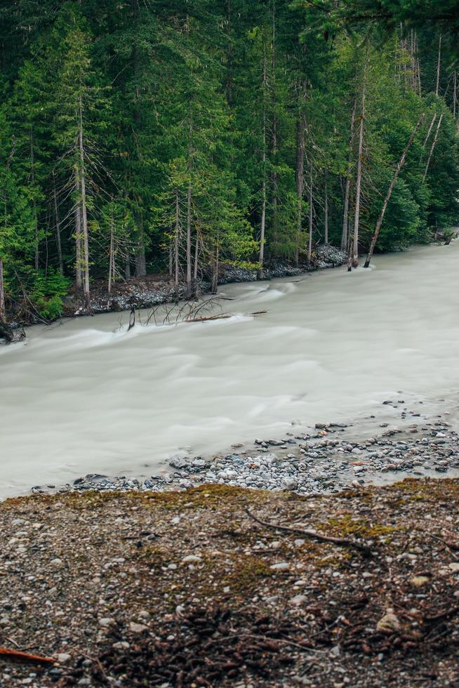 groene bomen naast stromende rivier foto