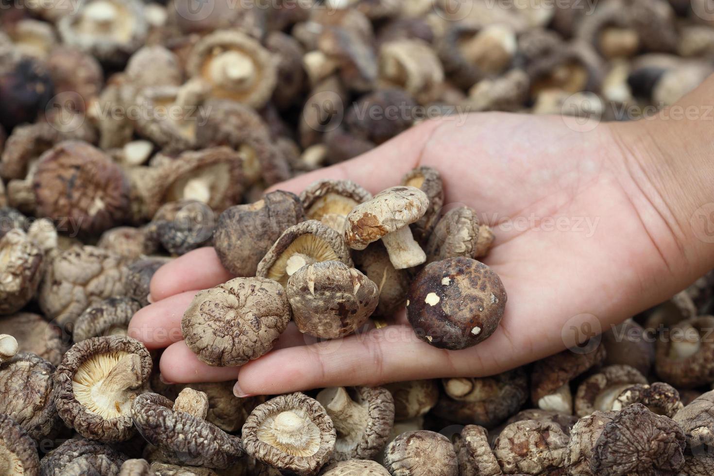 hand met gedroogde shiitake-paddenstoelen foto