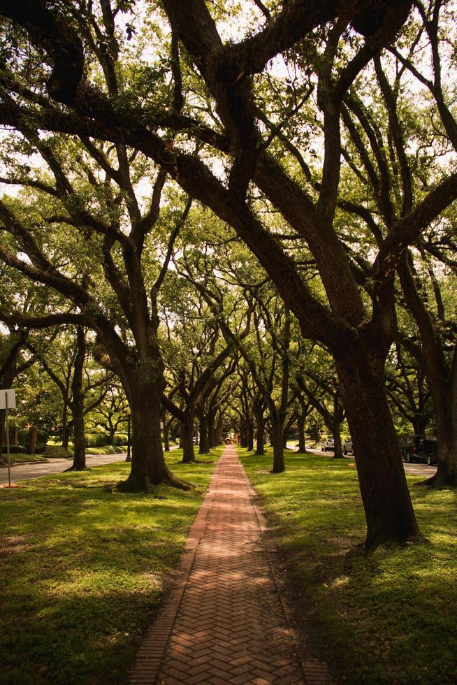 pad tussen bomen overdag foto