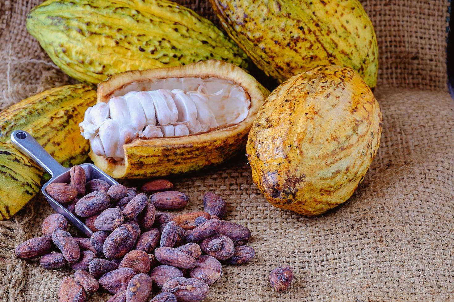 verse cacao met cacaopeulen en cacaobonen foto