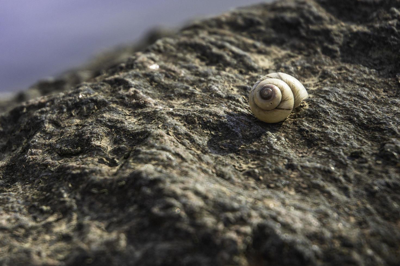 slak op een rots foto