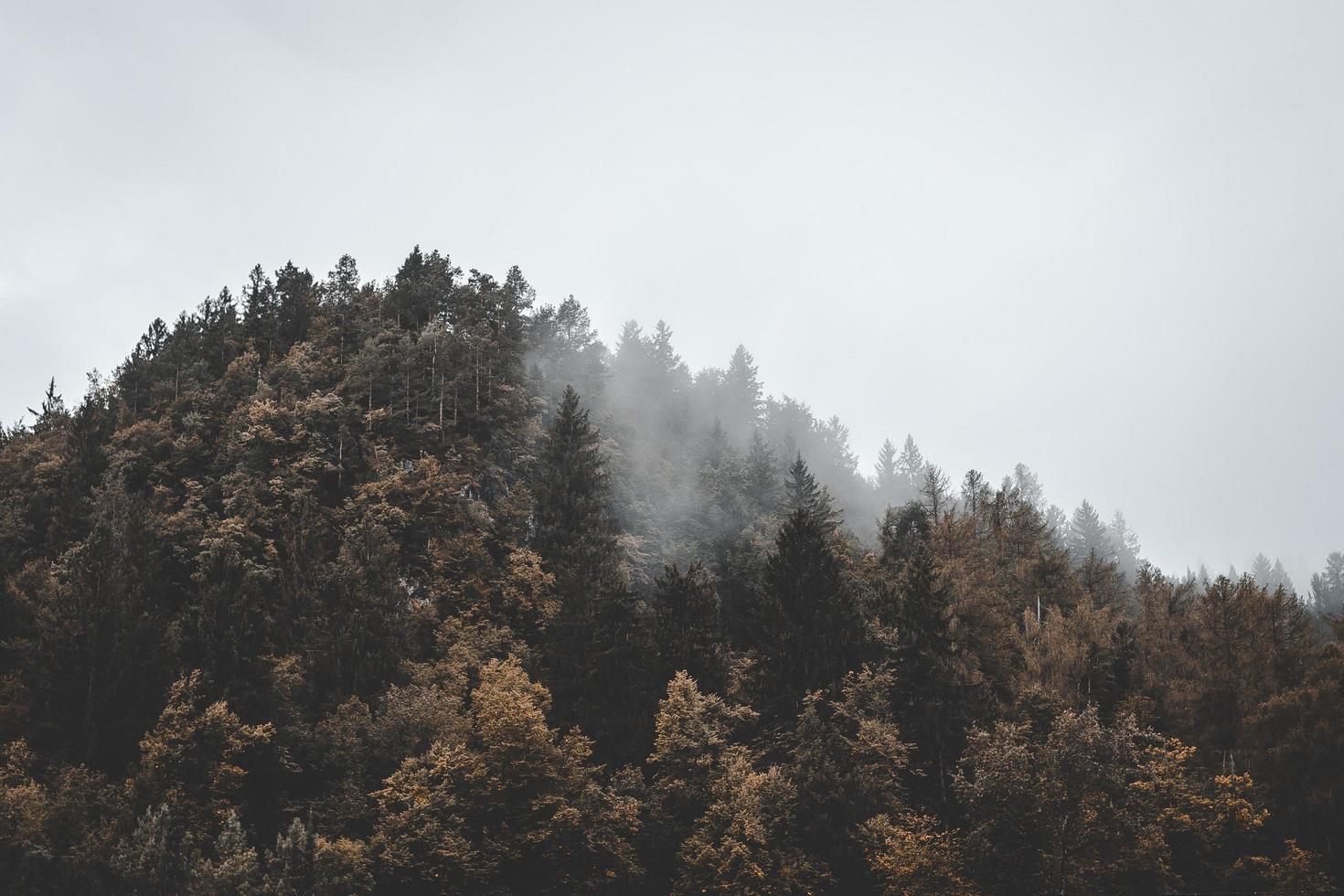 luchtfoto van bos op de berg foto