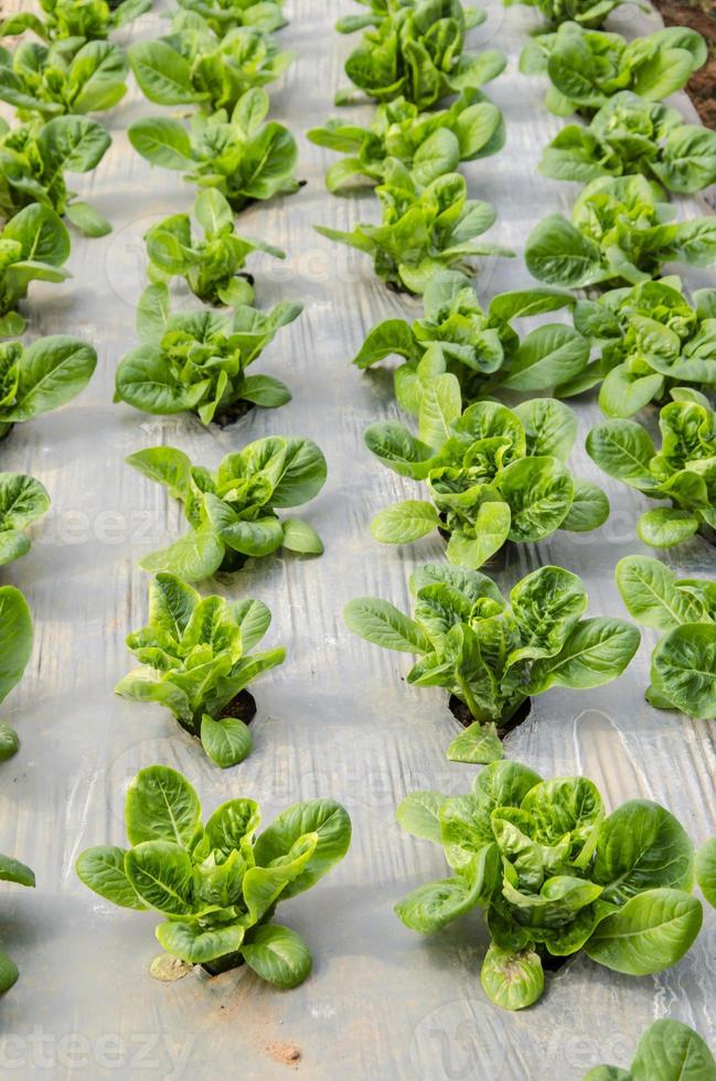 biologische groente foto