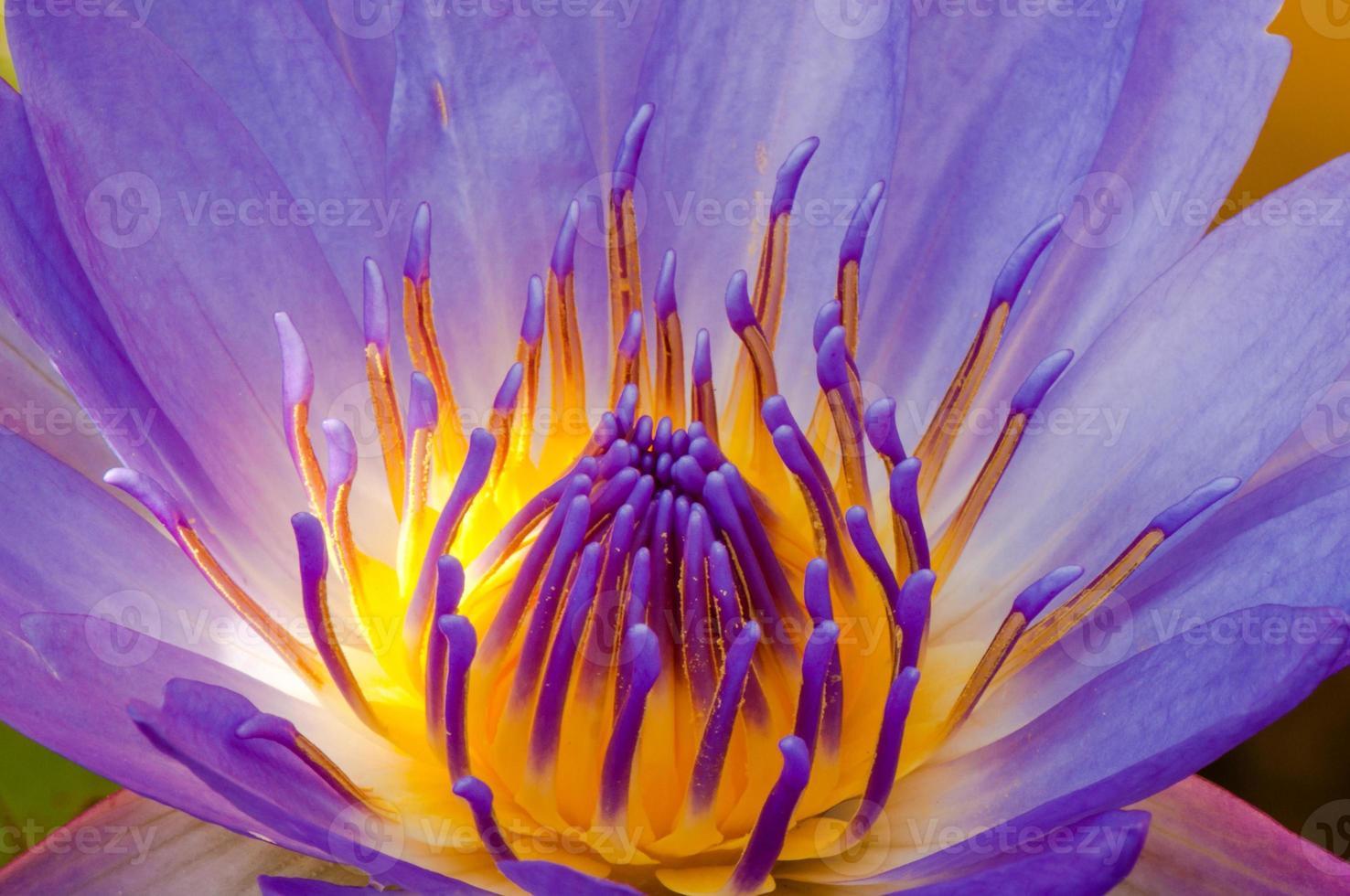 de close-up stuifmeel en bloemblaadjes foto