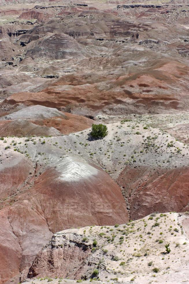 kleurrijk geschilderde woestijn en hardnekkige vegetatie foto