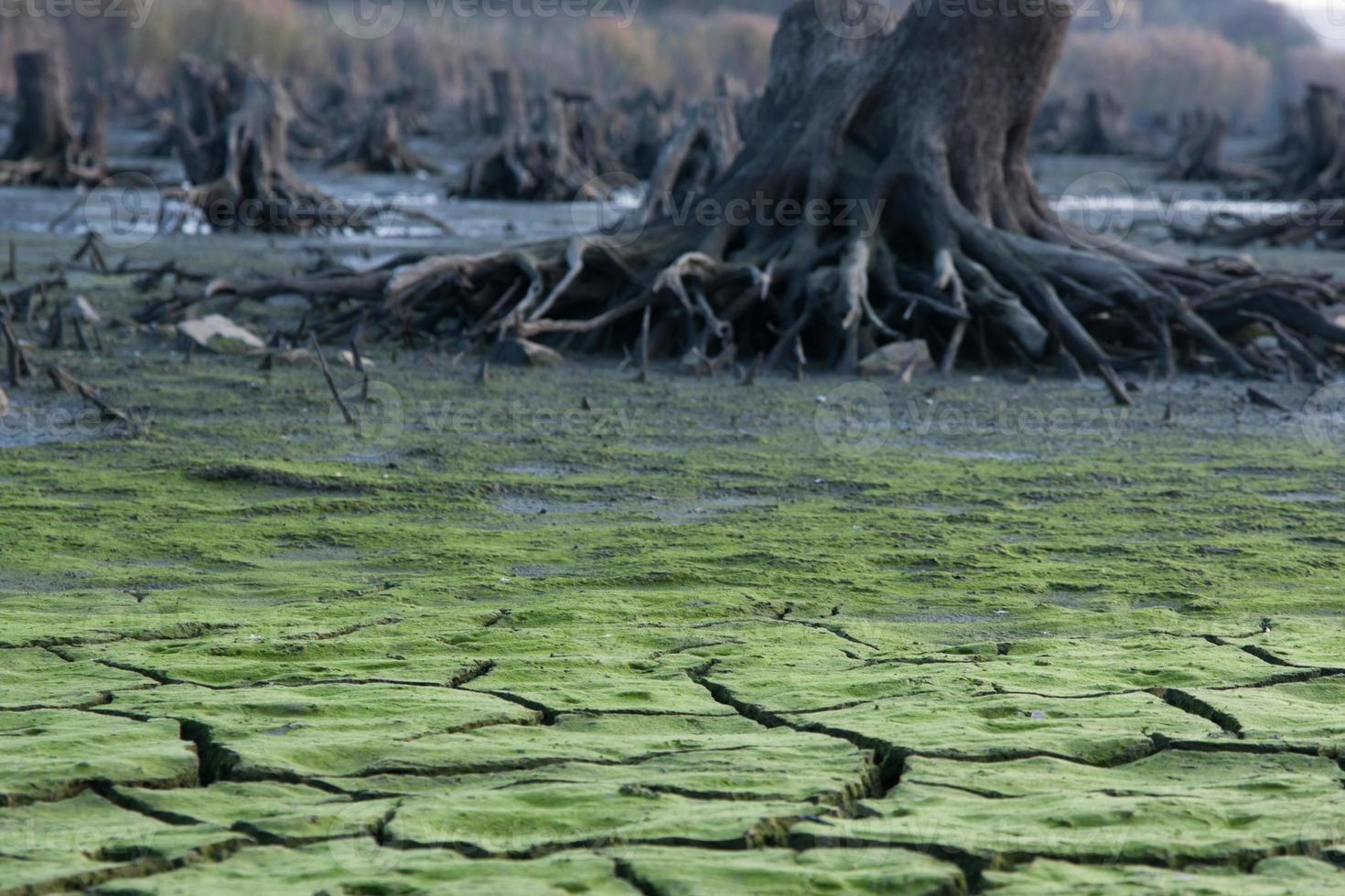 close-up van een natuurgebied foto