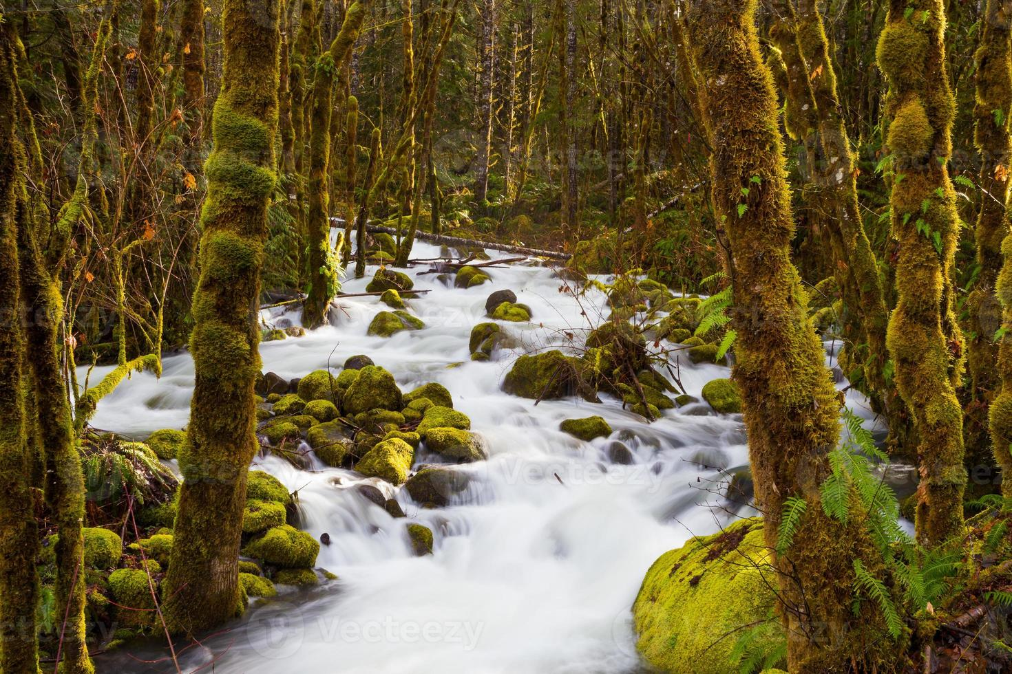 kreek stroomt door bos foto