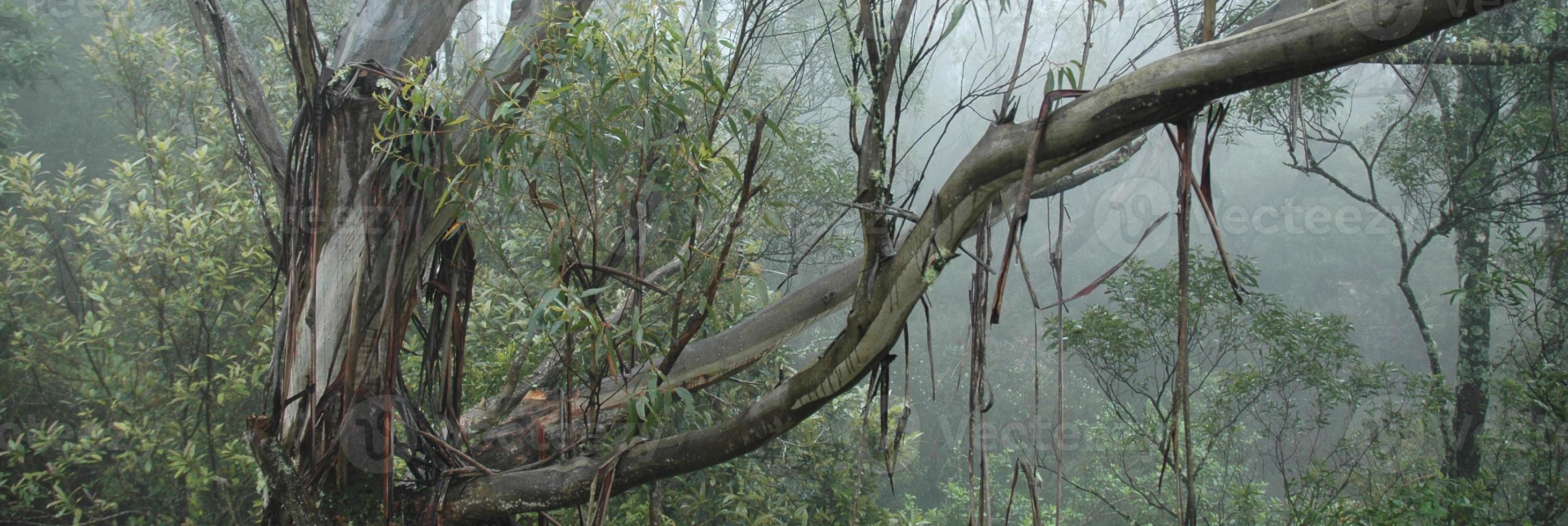 het bos foto