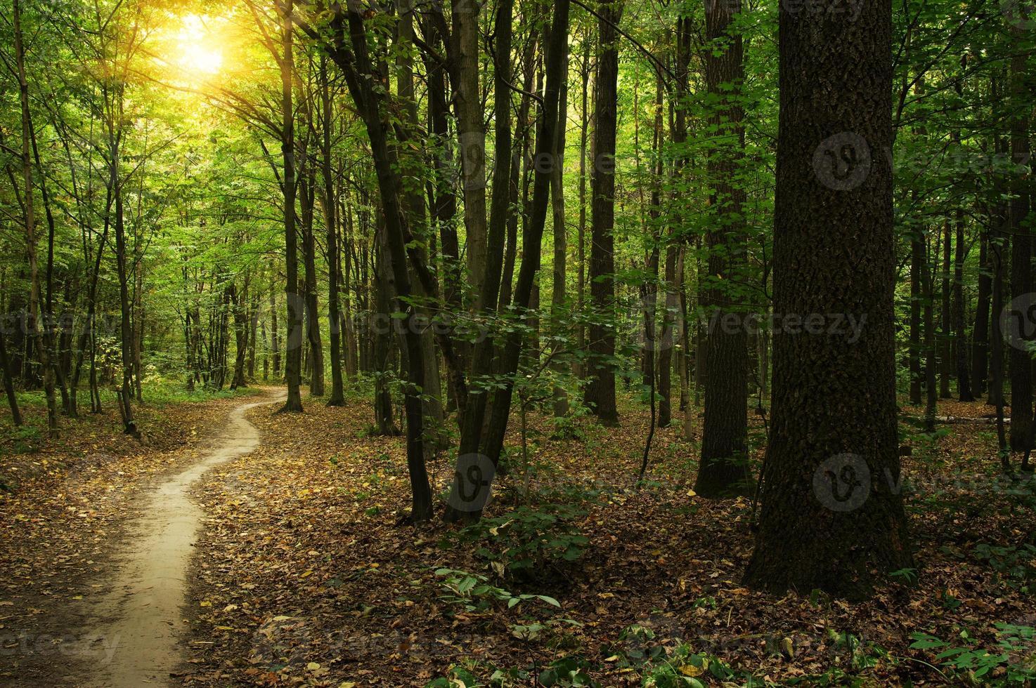 bos met zonlicht foto