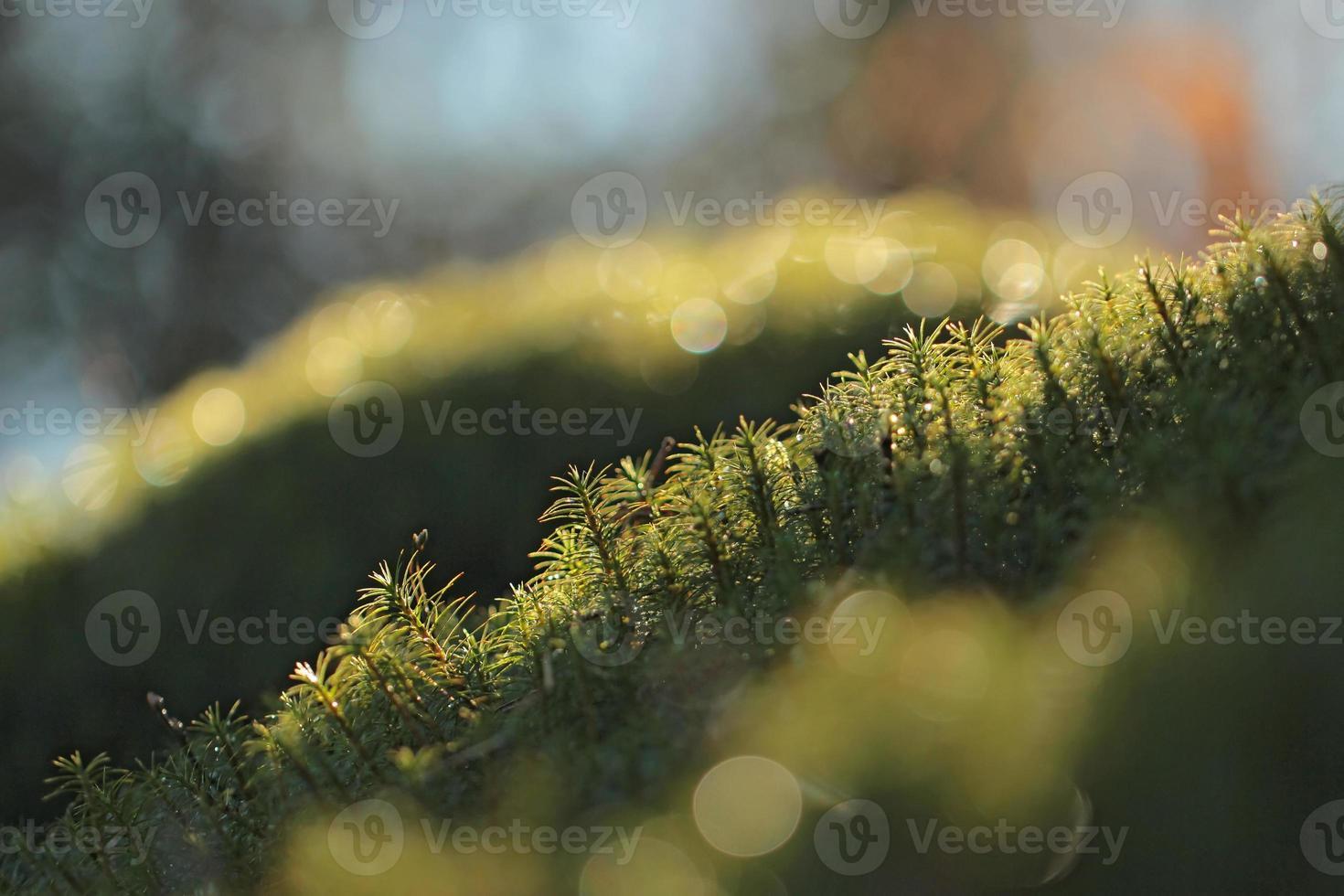 mos in het bos foto