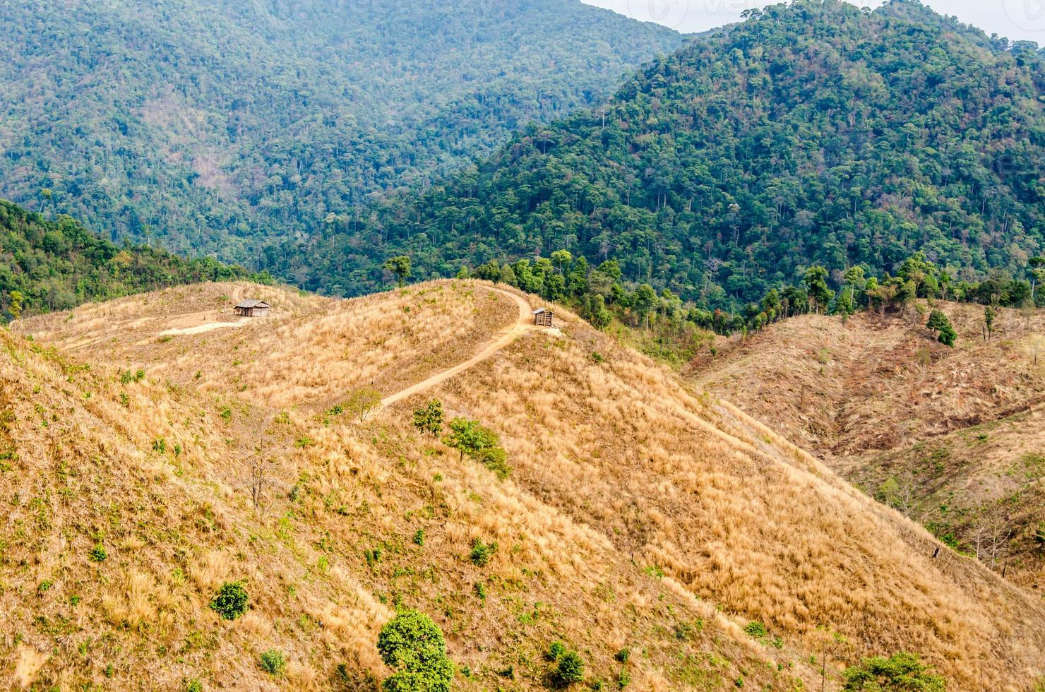 gedegradeerd bos op berg in thailand foto